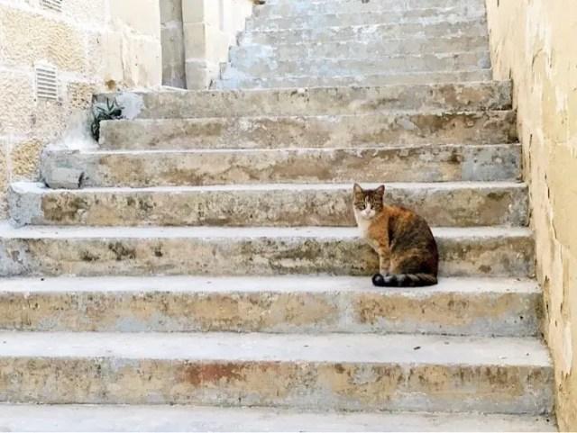 Shy cat, Malta