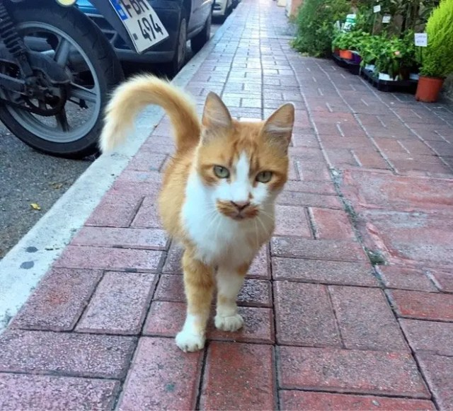 Friendly cat, St Julian's, Malta
