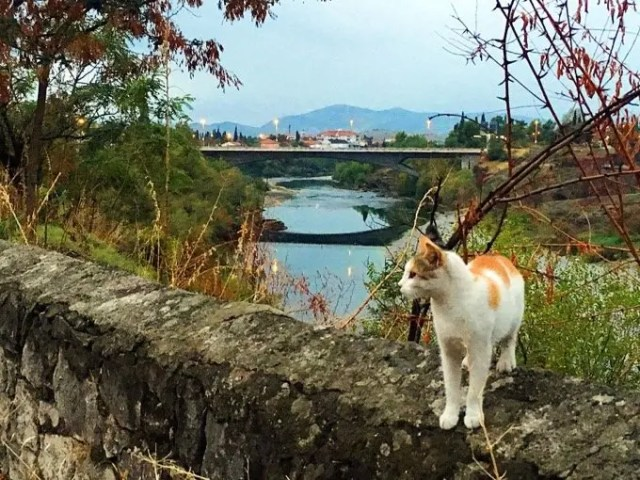 Cats of Podgorica