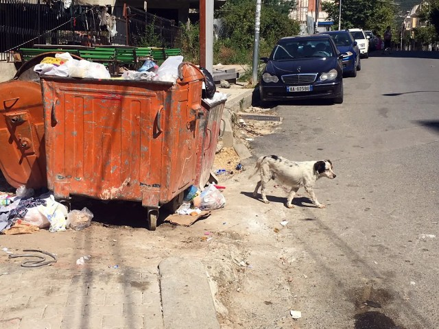 Rubbish pile, stray dog, new Mercedes-Benz