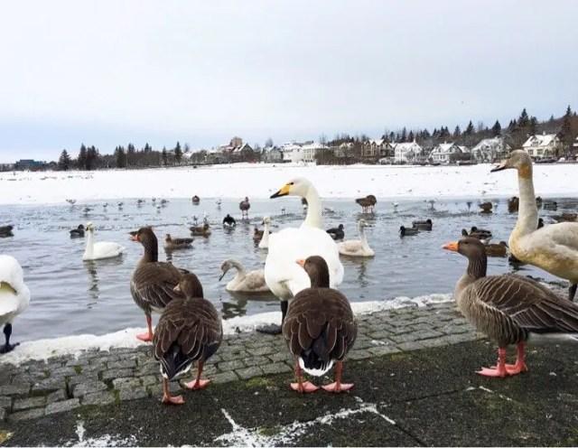 Hey duckies