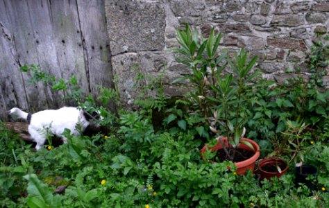 oleanderkwint.jpg