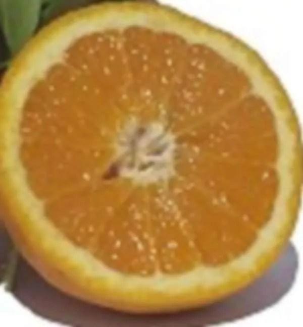 arancie biologiche