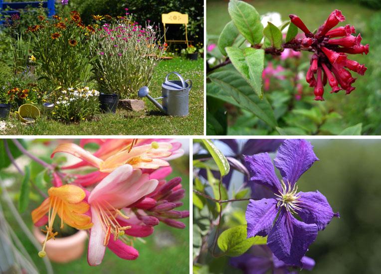 Blütenpracht im Bauerngarten