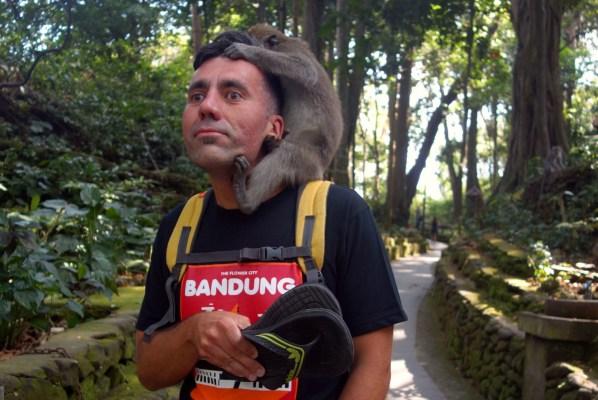 Affenbiss im Monkey Forest, Ubud, Bali