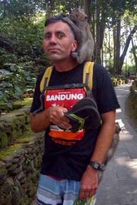 makaken angriff monkey forest 04b