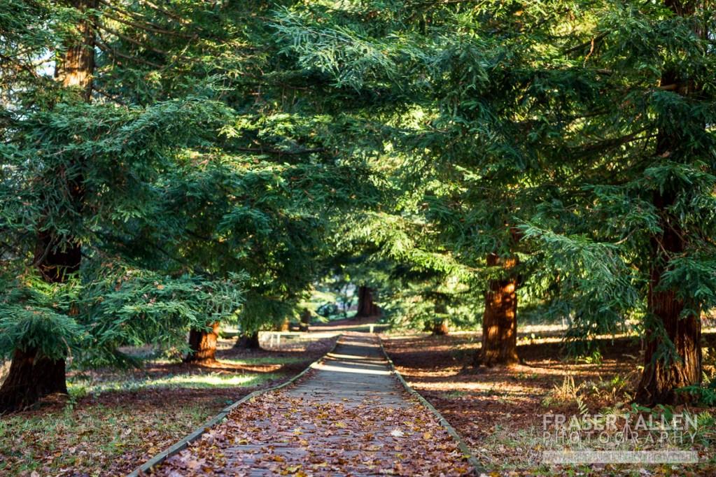The board-walk in Bedgebury