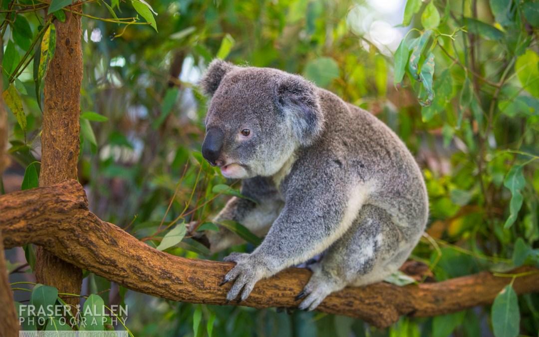 Australia – Wildlife