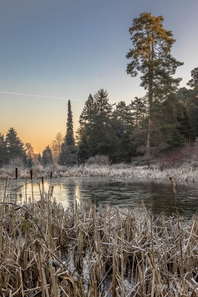 Bedgebury frost