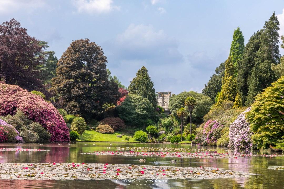 Sheffield Park Gardens lillies