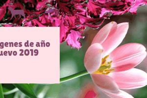 Imagenes de año nuevo 2019