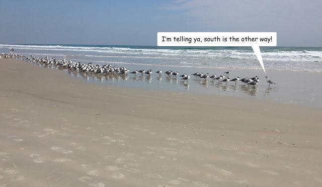 ConfusedBirds