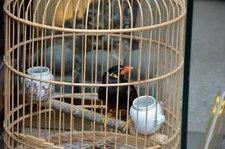 myna cage