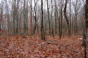 Van Buren County Land for Sale