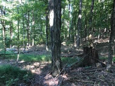 I71 acres - Van Buren County, TN