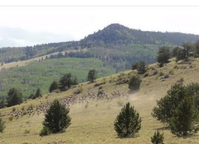 Park County, Colorado Land for Sale