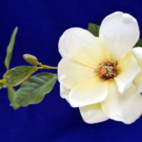Magnolia spray beauty