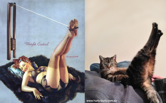 Cat Pinup