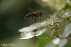 Flashback 2012 - Biene im Landeanflug