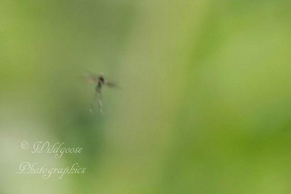 fairy in air