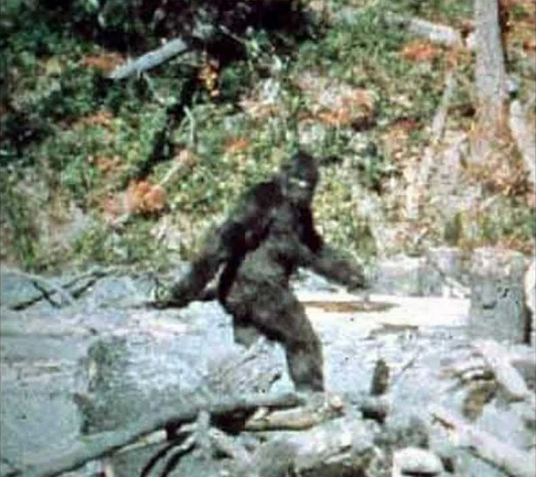 The Patterson-Gimlin Bigfoot footage