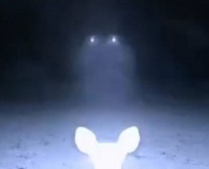 deer-ufo-caught-on-trail-camera