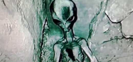 Injured Grey alien found and filmed