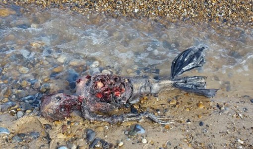mermaid-prop-washes-ashore