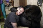 robin-willams-with-koko-the-gorilla