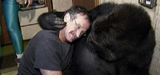 Koko the Gorilla meets Robin Williams