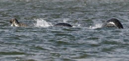 Amateur photographer captures Loch Ness monster on camera