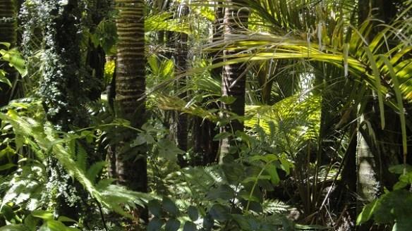 amazon-rainforest