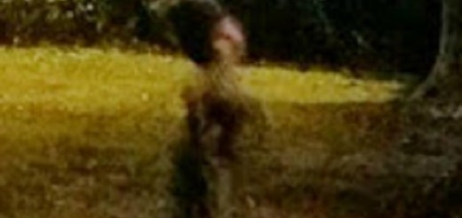 Strange sylvan creature photographed at night