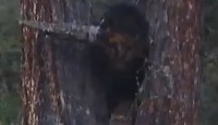 Demon head between the trees