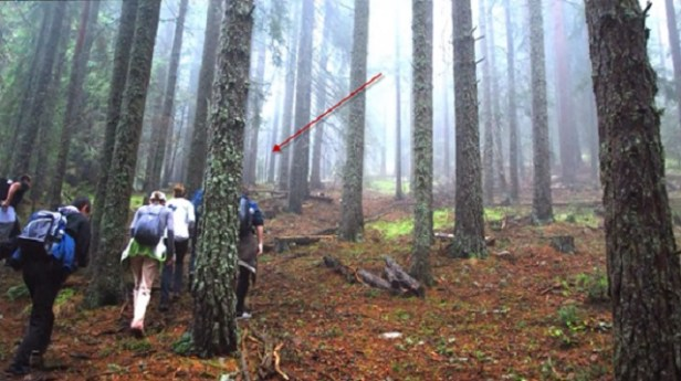 Bulgarian hikers spot alien in woods