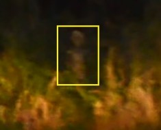 Drive by alien captured on camera