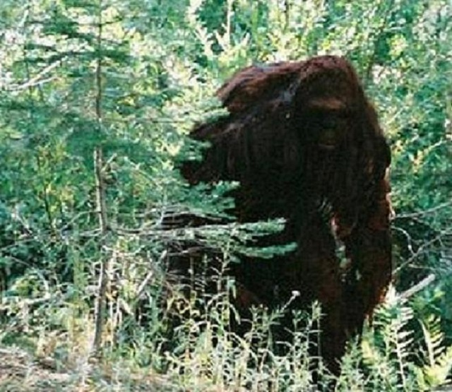 Bigfoot Alaska