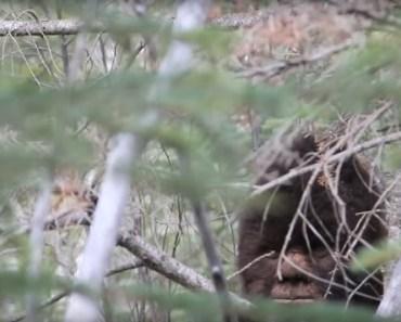 Bigfoot captured on video