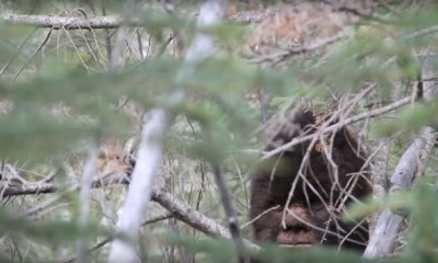 Bigfoot captured on video