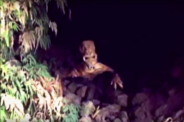Cave creature video Columbia