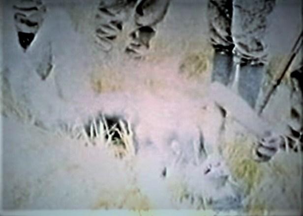 German soliders discover female werewolf