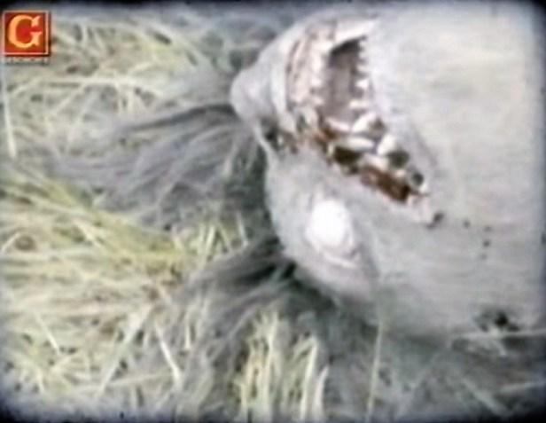German soliders find female werewolf closeup