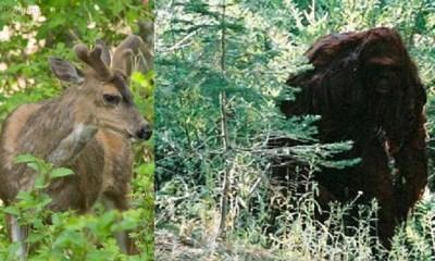 Hunter get's deer stolen by Bigfoot in Hobart Bay, Alaska
