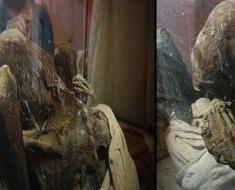 Mummy from private Peru museum