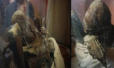 Mummy from private Peru museum