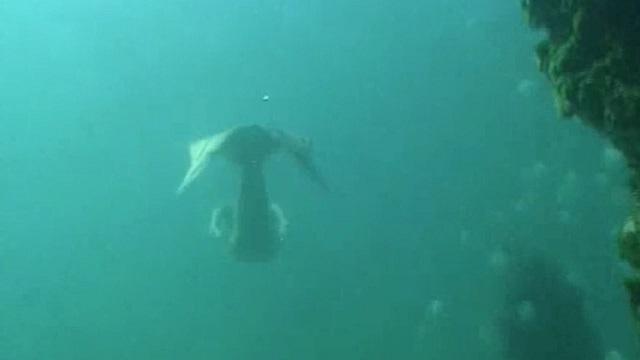 Mermaid caught on camera underwater