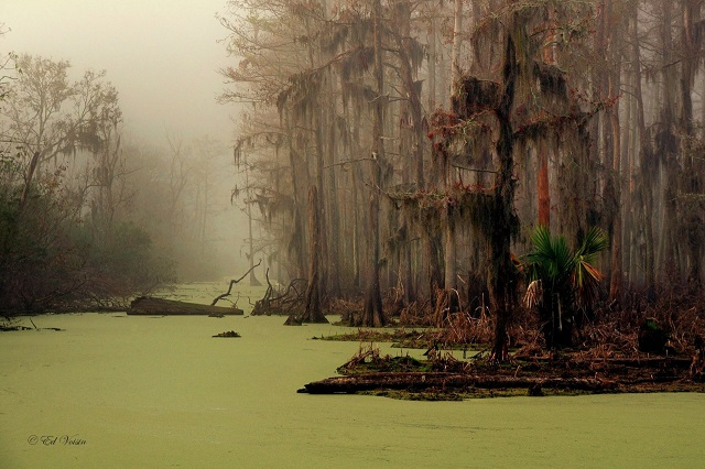 Manchac Swamp Louisiana