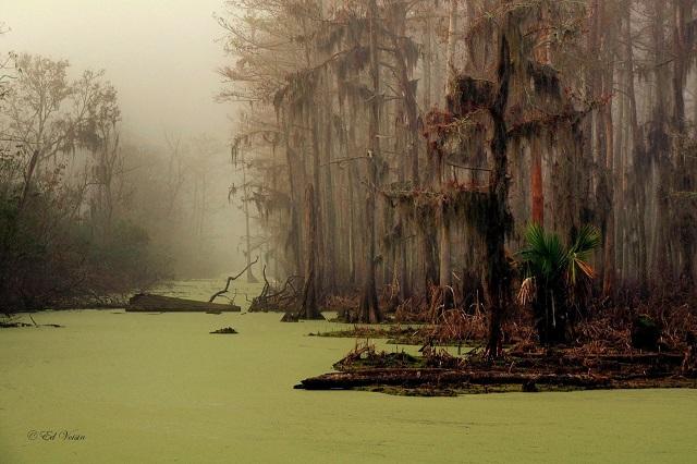 Marais de Manchac en Louisiane