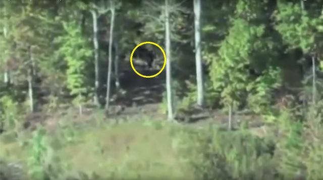 Bigfoot in backyard