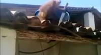 Drunk monkey steals knife freaking people out